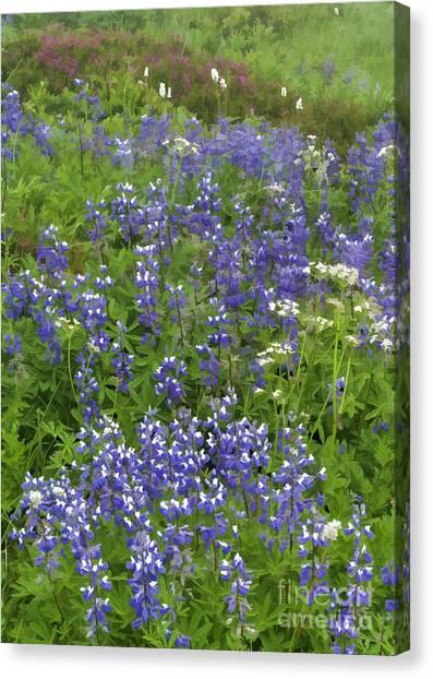 Rainier's Wildflowers Canvas Print