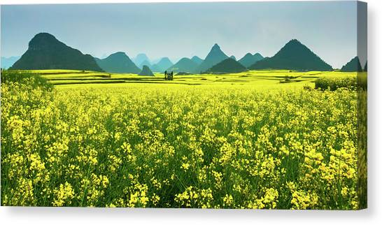 Rapeseed Flowers Canvas Print by Sunnyha  Images