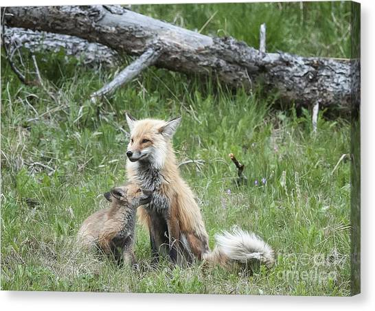 Red Fox And Kit Canvas Print by Bob Dowling
