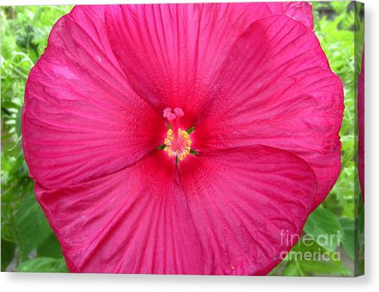 Red Hibiscus Series 2 Canvas Print