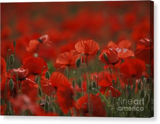 Botanical Garden Canvas Print - Red by Nailia Schwarz