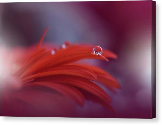 Drops Canvas Print - Red Passion... by Juliana Nan