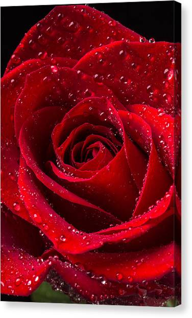 Red Roses Canvas Print - Red Rose With Dew by Garry Gay