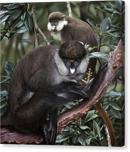 Red-tailed Monkey Cercopithecus Ascanius Canvas Print by Owen Bell
