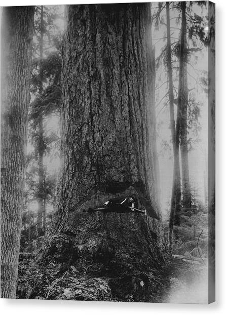 Axes Canvas Print - Resting In Redwood by Retro Images Archive