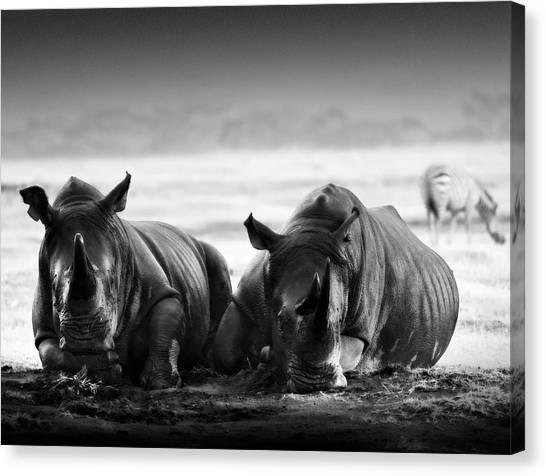 Rhinocerus Canvas Print - Resting In The Rain by Mike Gaudaur