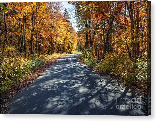 Algonquin Park Canvas Print - Road In Fall Forest by Elena Elisseeva