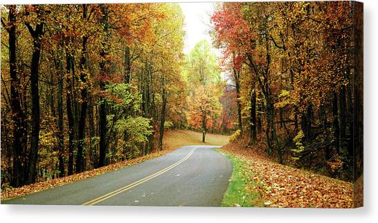Fallen Leaf Canvas Print - Road Passing Through A Forest, Blue by Panoramic Images
