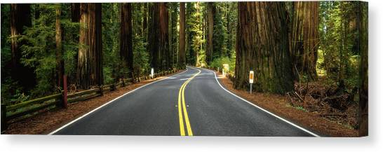 Redwood Forest Canvas Print - Road Winding Through Redwood Forest by Panoramic Images