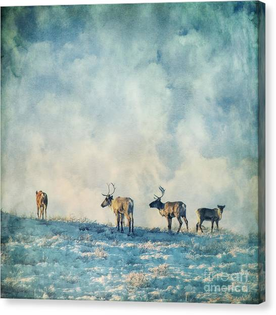 Snow Canvas Print - Roam Free by Priska Wettstein
