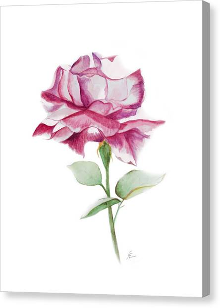 Rose 2 Canvas Print by Nancy Edwards