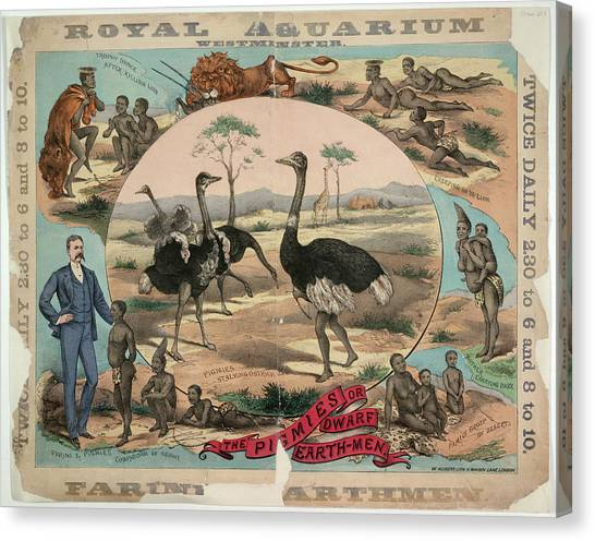 Emus Canvas Print - Royal Aquarium by British Library