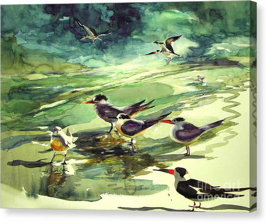 Royal Terns And Black Skimmers Canvas Print