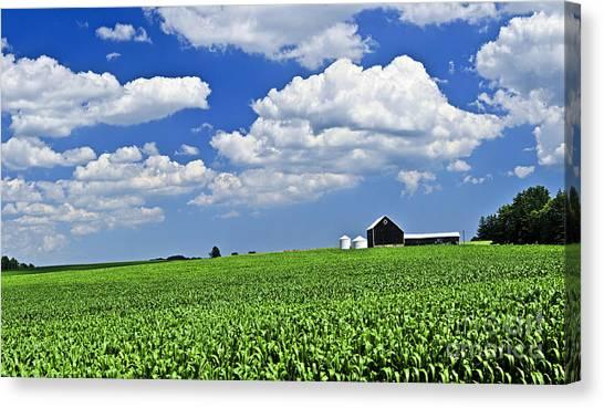 Corn Field Canvas Print - Rural Landscape by Elena Elisseeva