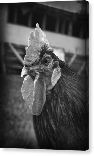 Canvas Print featuring the photograph Rusty by Kelly Hazel