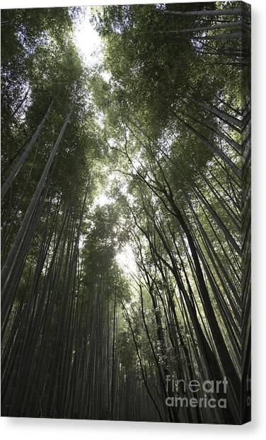 Sagano Bamboo Forest Canvas Print - Sagano Bamboo Forest by David Bearden
