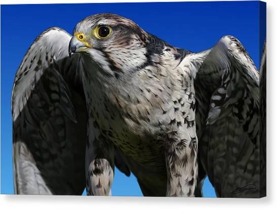 Saker Falcon Canvas Print by Owen Bell