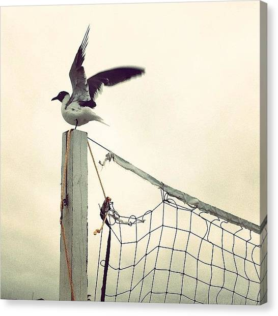 Volleyball Canvas Print - #saltlife #beachlife #beach #oceanstyle by Tony Sinisgalli