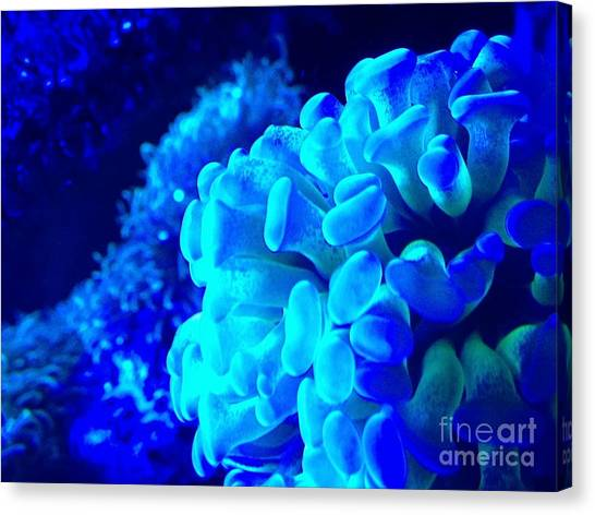Saltwater Life Canvas Print - Saltwater Life 8 by Marlene Williams