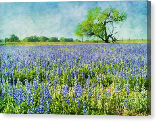 Sandy Bluebonnets Canvas Print
