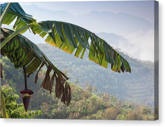 Banana Tree Canvas Print - Scenic View Of Fog Over Mountains by Panoramic Images