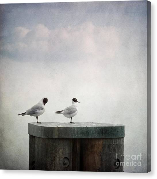Couple Canvas Print - Seagulls by Priska Wettstein