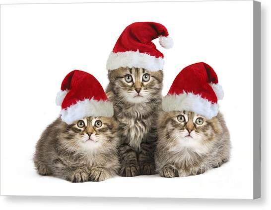 Siberian Cats Canvas Print - Siberian Kittens In Hats by Jean-Michel Labat