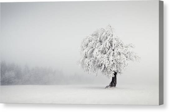 Frost Canvas Print - Silence by Andreas Wonisch