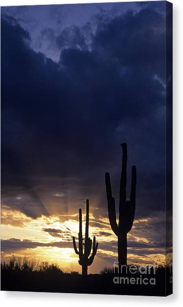Silhouetted Saguaro Cactus Sunset At Dusk Arizona State Usa Canvas Print