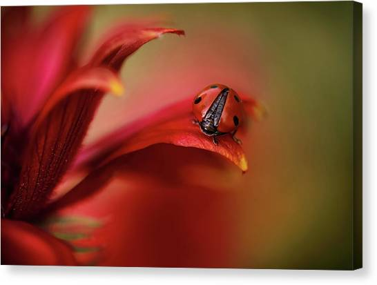 Simply Red Canvas Print by Mandy Disher