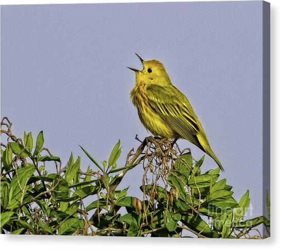 Singing Canvas Print