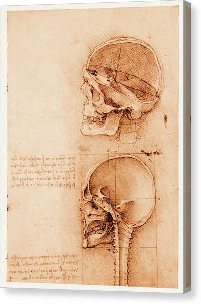 Skull Anatomy Canvas Print by Mehau Kulyk