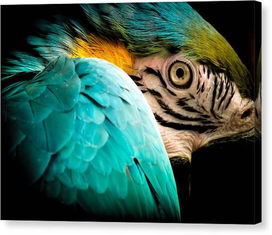 Macaws Canvas Print - Sleeping Beauty by Karen Wiles