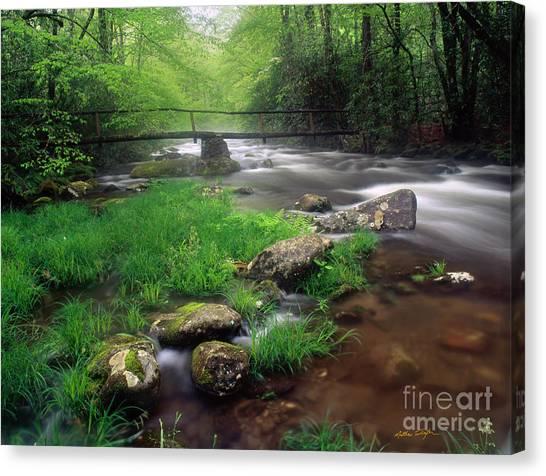 Smoky Mountain Stream 2009 Canvas Print