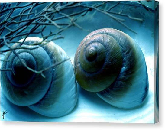 Snail Joy  Canvas Print