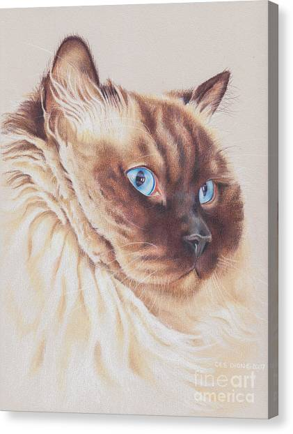 Himalayan Cats Canvas Print - Snickers by Christine Dion