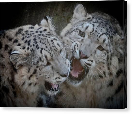 Snow Leopard Cubs Canvas Print