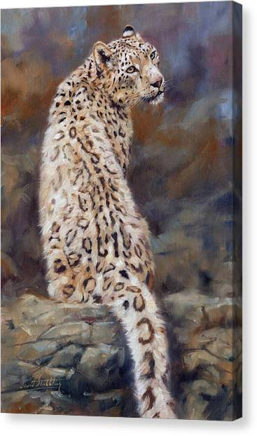 Himalayan Cats Canvas Print - Snow Leopard by David Stribbling