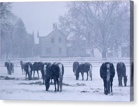 Snowfall Corral Canvas Print
