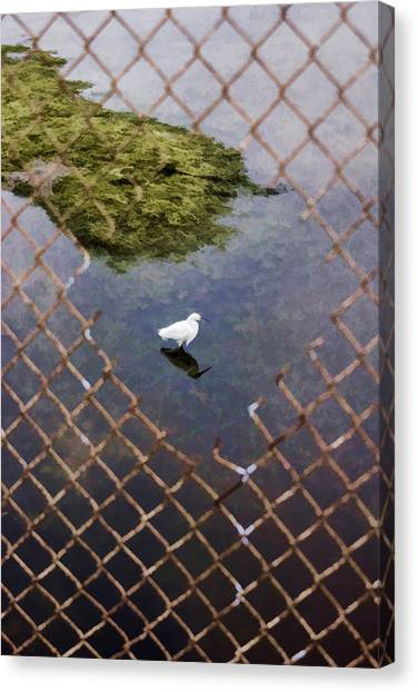 Snowy Egret  Canvas Print by Photographic Art by Russel Ray Photos