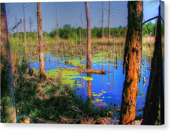 Southern Swamp Canvas Print
