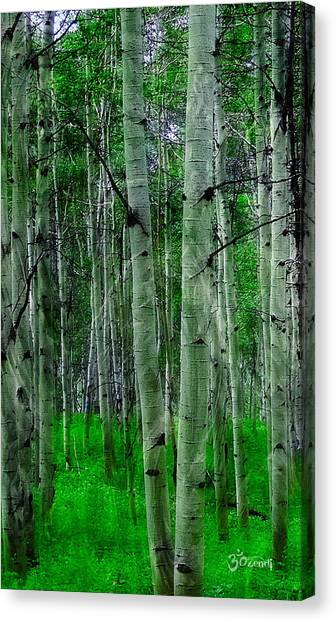 Spectacular Aspens Canvas Print