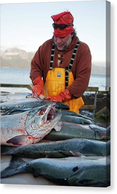 Fillet Canvas Print - Sport Fishing Catch by Jim West