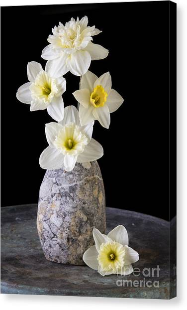 Daffodils Canvas Print - Spring Daffodils by Edward Fielding