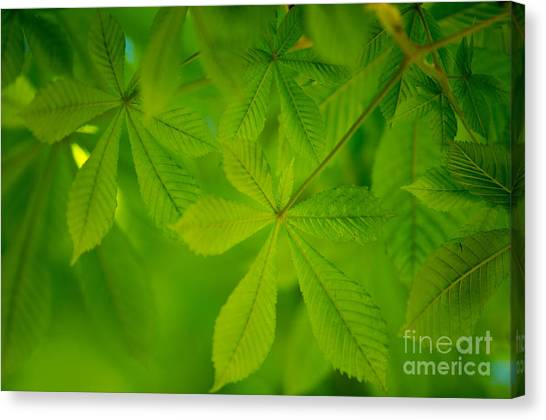 Soft Focus Canvas Print - Spring Green by Nailia Schwarz