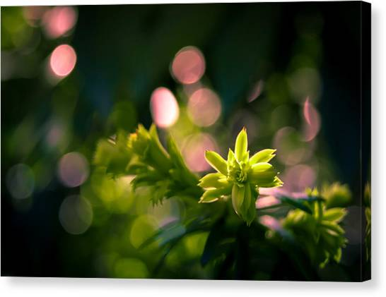 Sprout On Fire Canvas Print