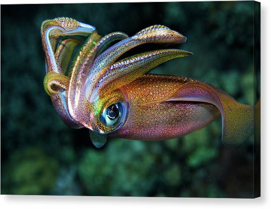 Squids Canvas Print - Squid by Anna Shvab