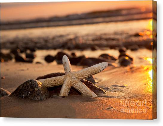 Starfish On The Beach At Sunset Canvas Print