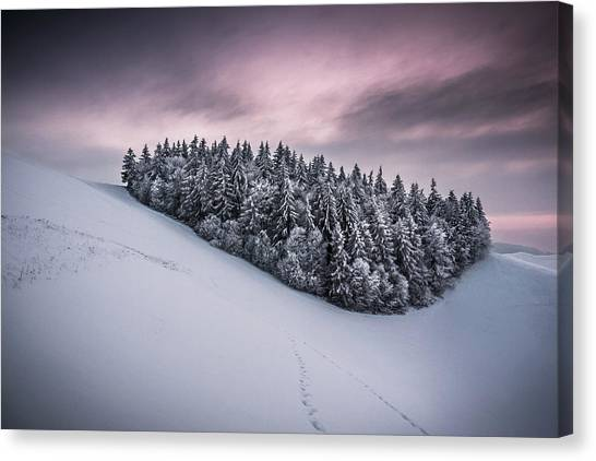 Fir Trees Canvas Print - Staying Together by Andreas Wonisch