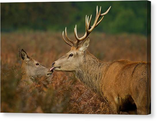 Stolen Kiss Canvas Print by Val Saxby